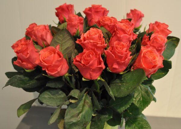 roosa 1